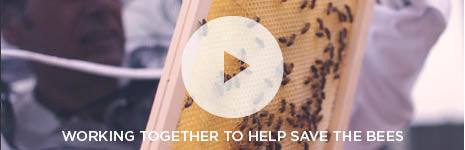 Popup Video -  Working together to help save the bees